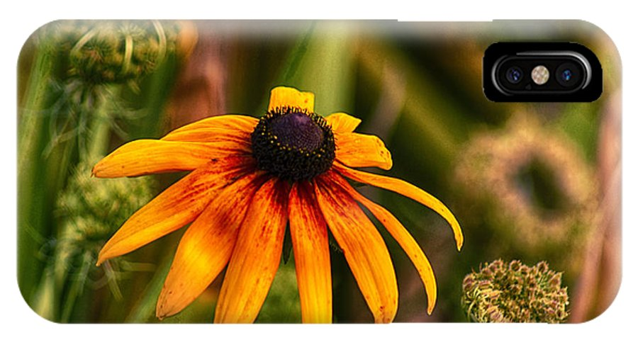 Black IPhone X Case featuring the photograph Eye To The Sun by Joe Geraci