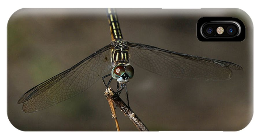 Nature IPhone X Case featuring the photograph Eyes Of Dragon by Barry Polston