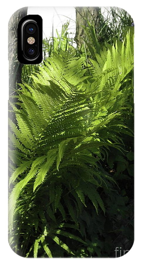 Dlgerring IPhone X Case featuring the photograph Fabulous Ferns by D L Gerring