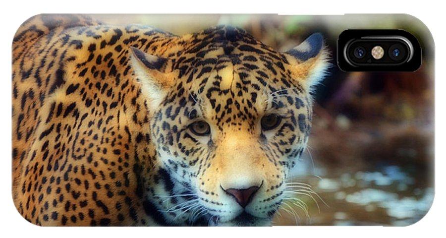 Jaguar IPhone X Case featuring the photograph Face Off by Frank Larkin