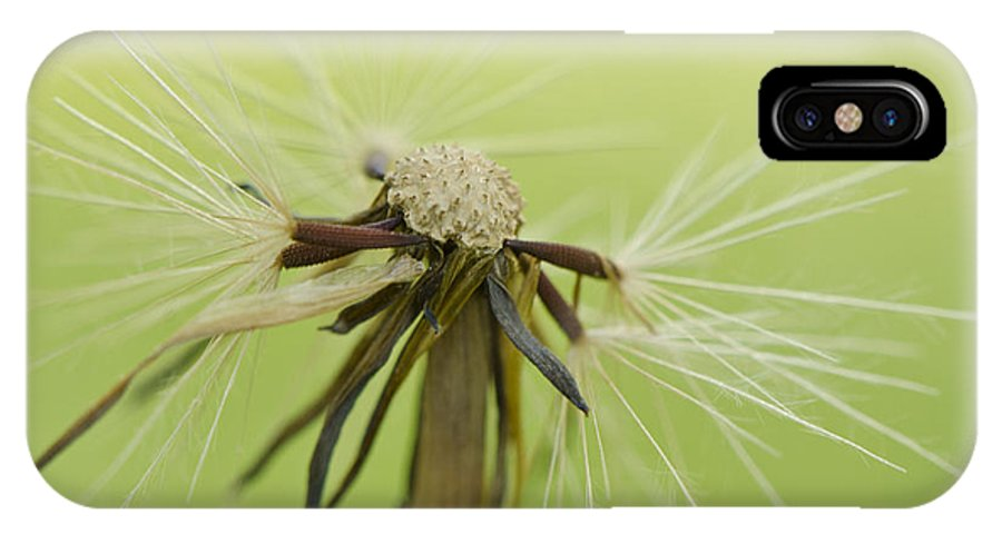 Dandelion IPhone X Case featuring the photograph Fading Beauty by Julie Wynn