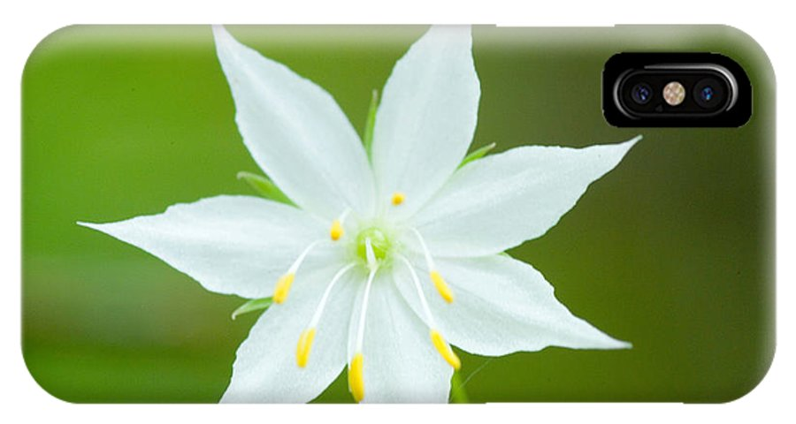 Lily IPhone X Case featuring the photograph Fairy Lily by Devinder Sangha