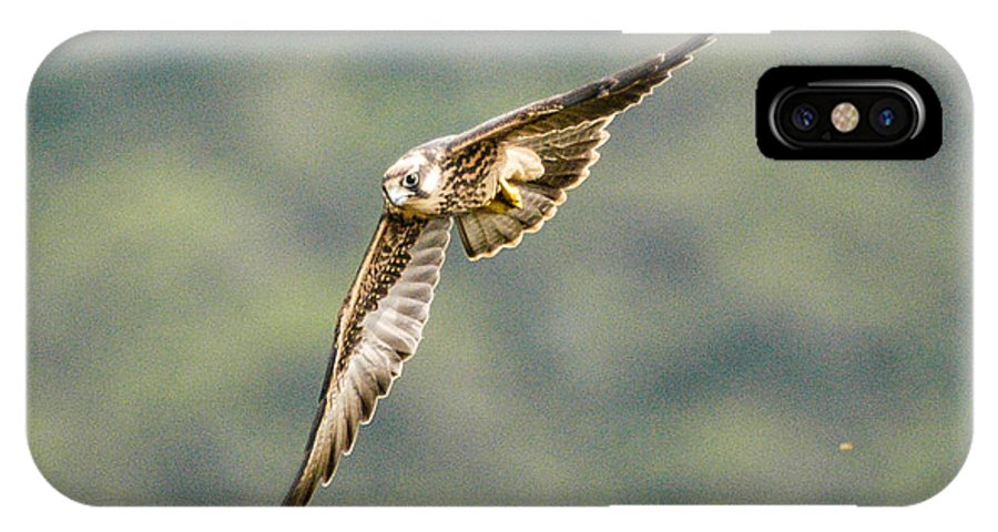 Africa IPhone X Case featuring the photograph Falcon by Alistair Lyne