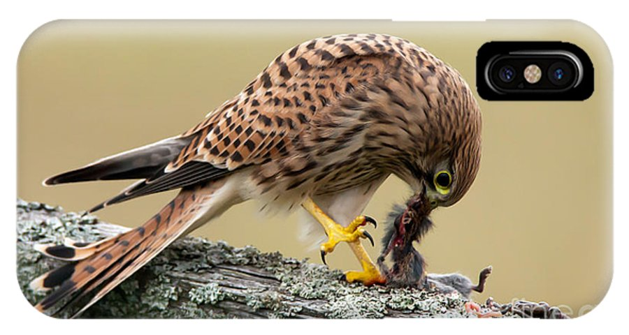 Kestrel IPhone X Case featuring the photograph Falcon's Breakfast by Torbjorn Swenelius