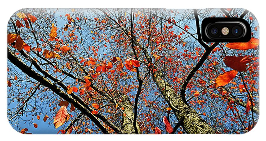 Beauty IPhone X Case featuring the photograph Fall Beauty by Charles Feagans