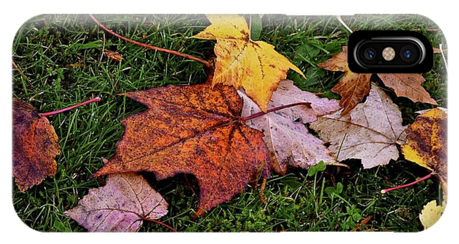 Leaf Photos IPhone X Case featuring the photograph Fall Colored Leaves by Lisa Telquist