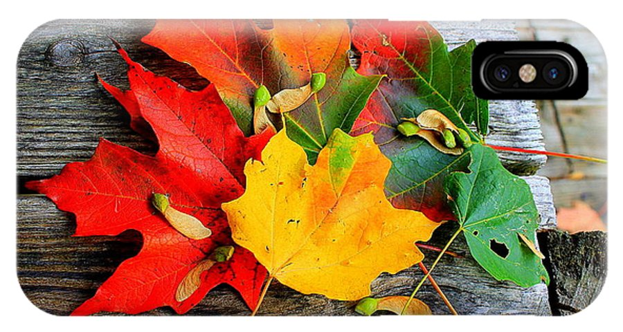 Fall Leaves Nj IPhone X Case featuring the photograph Fall Colors by Karl Monkemeyer
