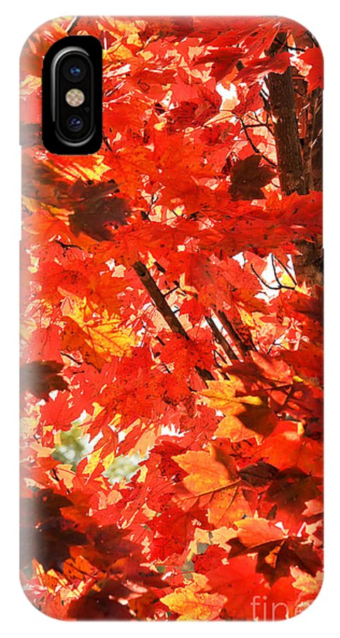 David Perry Lawrence IPhone X Case featuring the photograph Fall by David Perry Lawrence