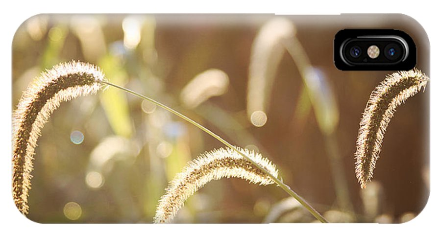 Foxtail Grass IPhone X Case featuring the photograph Fall Grass by Tammy Hileman
