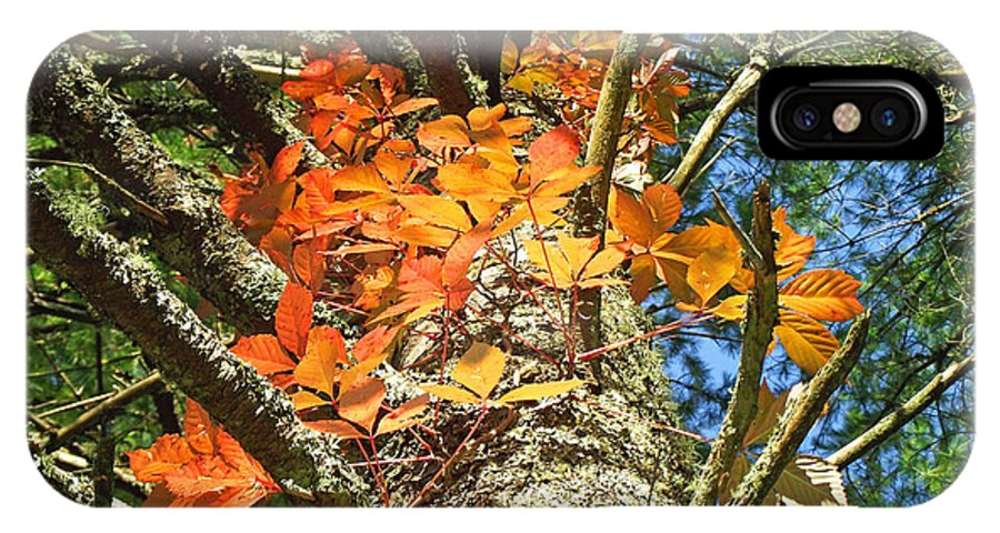 Duane Mccullough IPhone X Case featuring the photograph Fall Ivy On Pine Tree by Duane McCullough