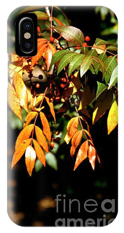 Fall Color IPhone X Case featuring the photograph Fall Leaves by Kathy McClure