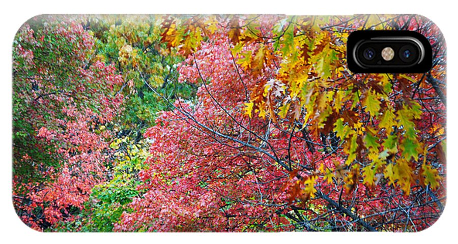 Fall IPhone X Case featuring the photograph Fall Tree Leaves by Jost Houk