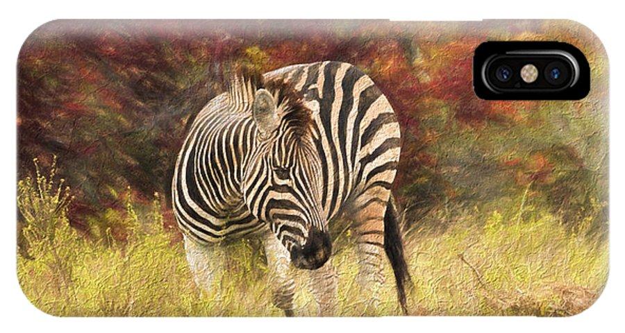 Zebra IPhone X Case featuring the photograph Fall Zebra by David Gleeson