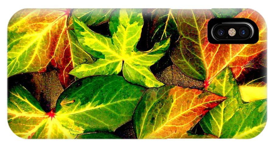 Fall IPhone X Case featuring the photograph Fallen Colors by Maurisca Sardju
