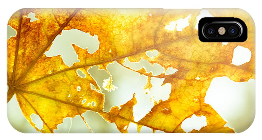 Leaves IPhone X Case featuring the photograph Falling All Around by Christina Kozlowski