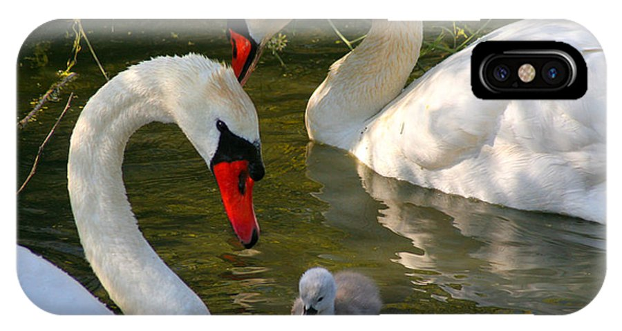 Swan IPhone X Case featuring the photograph Family by Thomas Miller