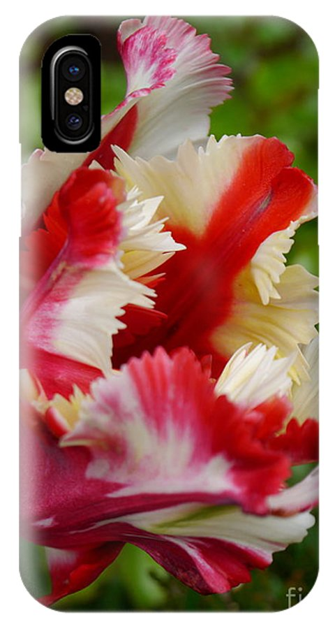 Parrot Tulip IPhone X Case featuring the photograph Fancy Spring by Christiane Schulze Art And Photography