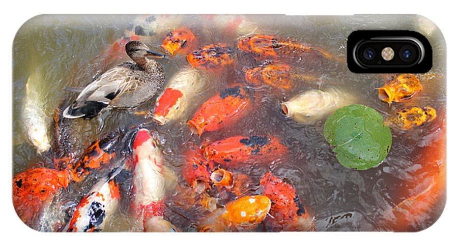 Feeding IPhone X Case featuring the photograph Feeding Frenzy by Calazone's Flics