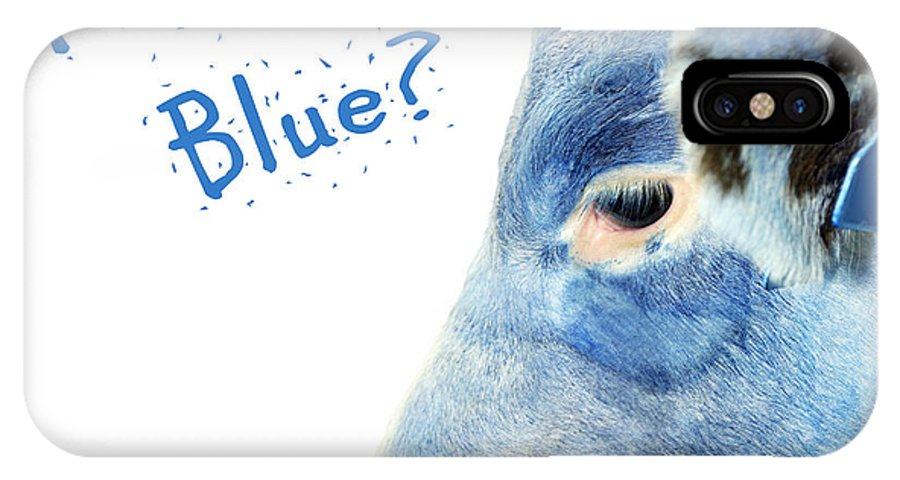 Blue IPhone X Case featuring the photograph Feeling Blue Calf by Sylvie Bouchard