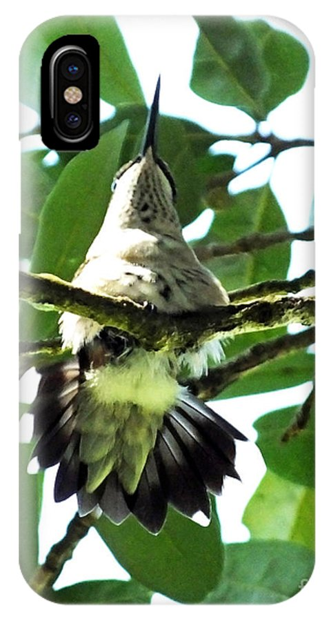 Bird IPhone X Case featuring the photograph Female Ruby Throated Hummingbird by Lizi Beard-Ward