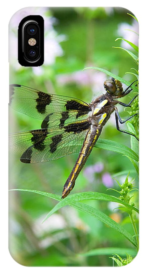 Insect IPhone X / XS Case featuring the photograph Female Twelve-spotted Skimmer by Gregory K Scott