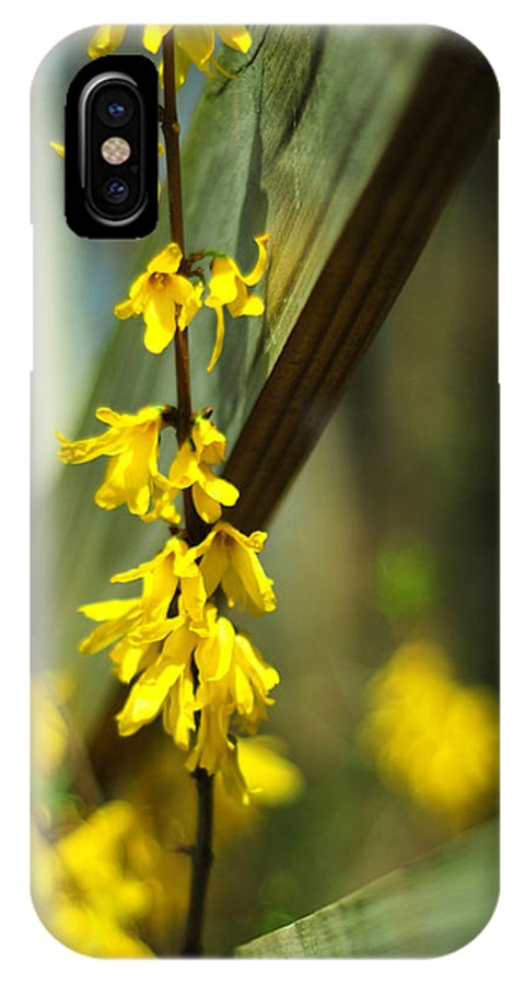 Yellow Forsythia Flowers IPhone X Case featuring the photograph Fenceside Forsythia by Rebecca Sherman