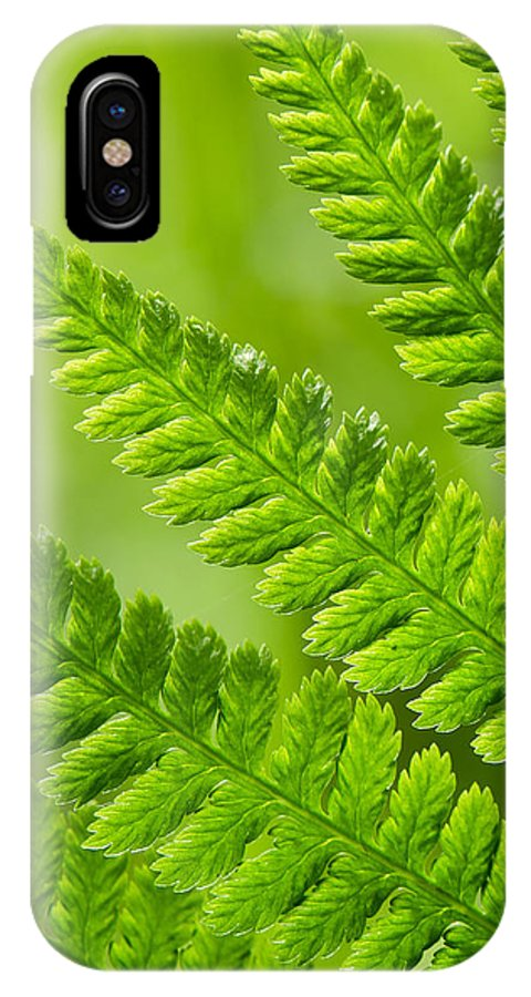 Fern IPhone X Case featuring the photograph Fern Abstract by Daniel Ward
