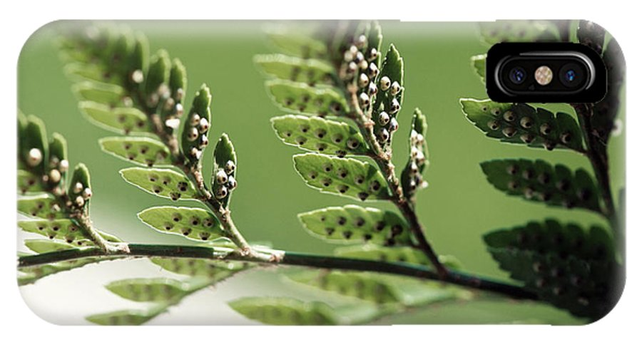 Plants IPhone X Case featuring the photograph Fern Seeds by Lisa Knechtel