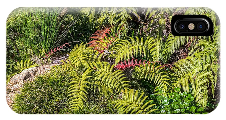 Hdr IPhone X Case featuring the photograph Ferns And More by Kate Brown