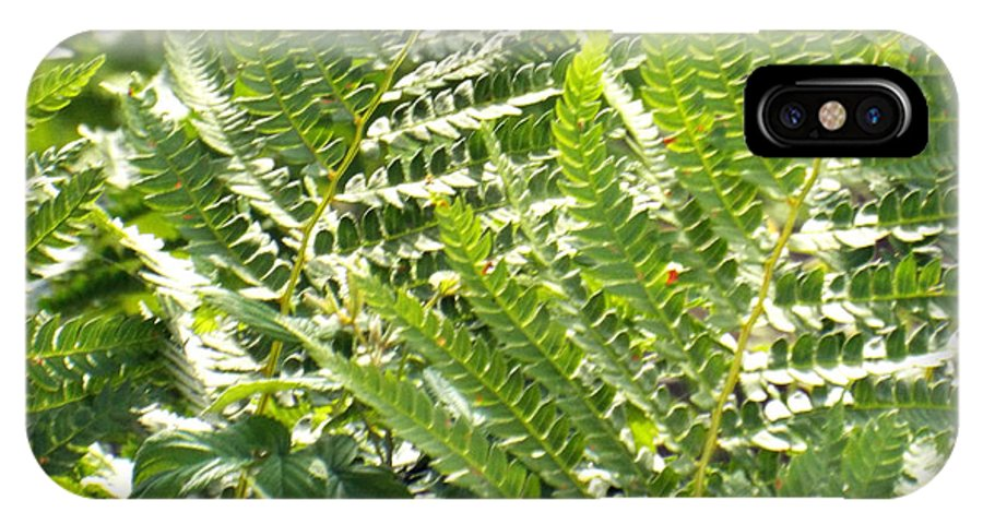 Nature Photography IPhone X Case featuring the photograph Ferns by Rebecca Malo