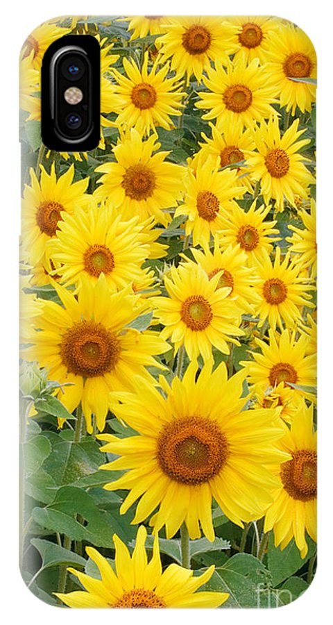 Flora IPhone X / XS Case featuring the photograph Field Of Sunflowers Helianthus Sp by David Davis