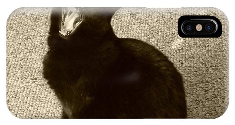 Black Cat IPhone X / XS Case featuring the photograph Fierce by Maria Manna