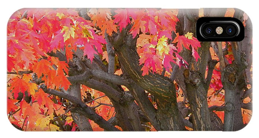 Maple Tree IPhone X Case featuring the photograph Fire Maple by Laura Yamada