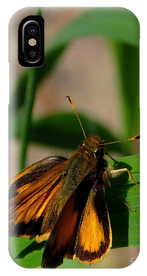 Firey Skipper Butterfly North American Butterfly Species Small Orange And Black Butterfly Invertebrates IPhone X Case featuring the photograph Fire Skipper by Joshua Bales