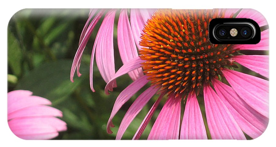 Cone Flower IPhone X Case featuring the photograph First Cone Flower by Cheryl Hardt Art