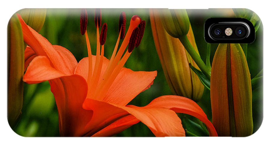 Tiger Lilly IPhone X Case featuring the photograph First To Bloom by Grace Grogan