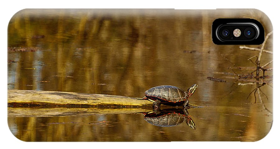 Painted Turtle IPhone X Case featuring the photograph First Turtle by Thomas Young