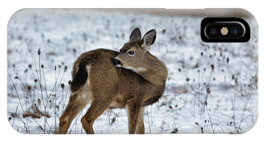 Fawn IPhone X Case featuring the photograph First Winter by Belinda Greb