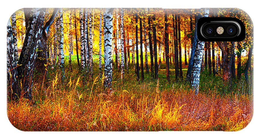 Autumn IPhone X Case featuring the photograph Flaming Grass by Jenny Rainbow