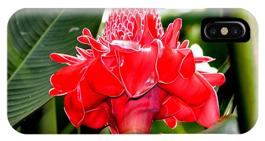 Flower IPhone X Case featuring the photograph Red Torch Ginger by Jill Black