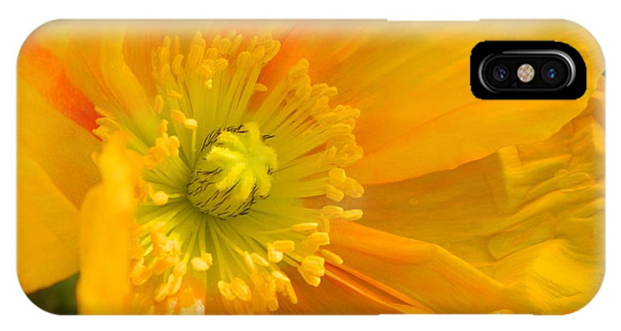 Yellow IPhone X Case featuring the photograph Flaming Yellow Poppy by Nicki Bennett