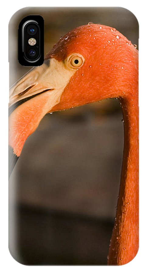 3scape IPhone X Case featuring the photograph Flamingo by Adam Romanowicz