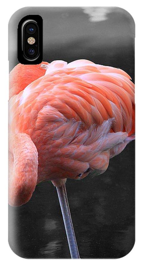 Pink Flamingo Bird Sleeping One Leg Black And White Background Nature Park Landscape Wildlife IPhone X / XS Case featuring the photograph Flamingo by AR Annahita
