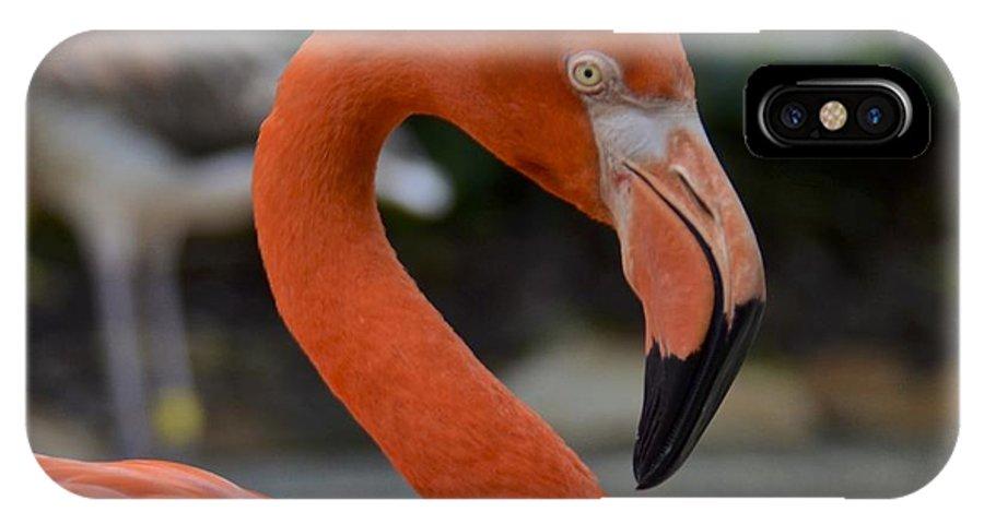 Busch Gardens IPhone X Case featuring the photograph Flamingo by Carol Bradley