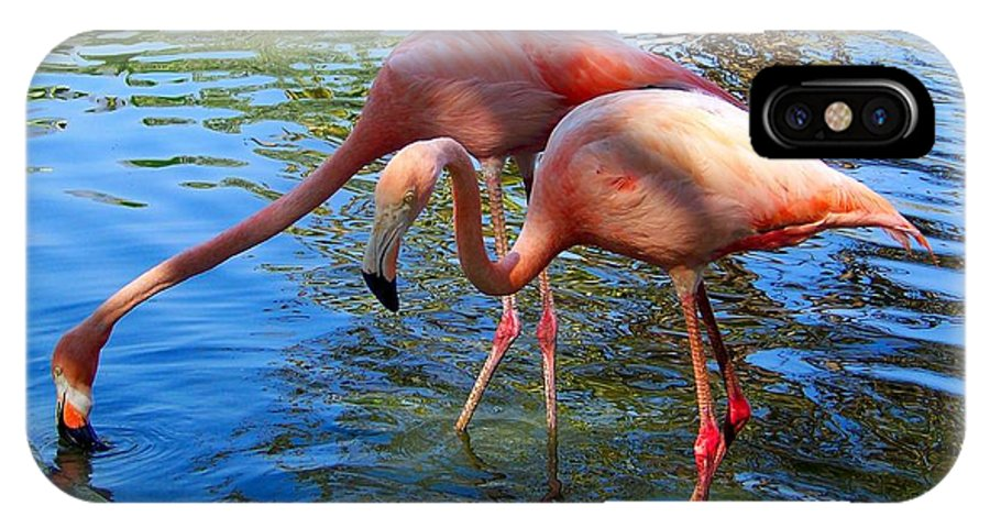 Flamingo IPhone X Case featuring the photograph Flamingo Duo by Joseph Marquis