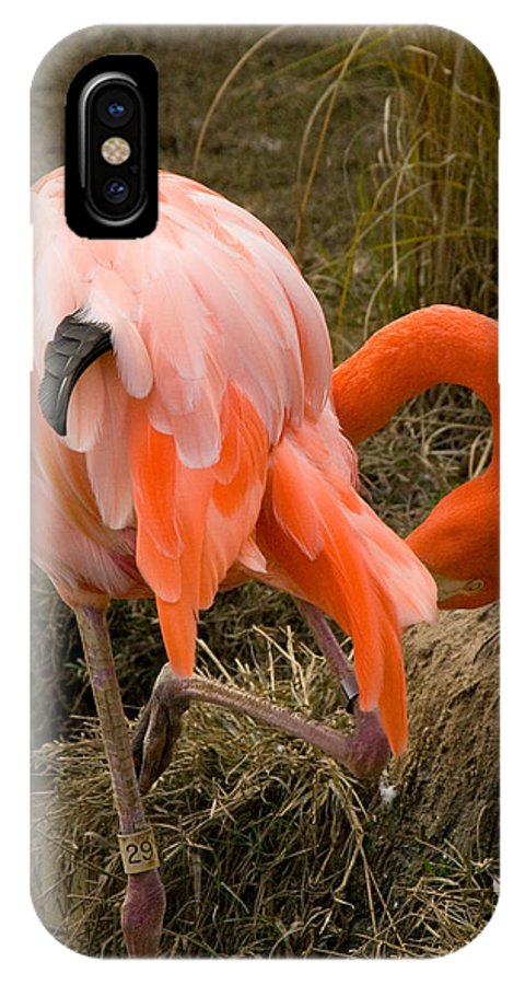 Tulsa Photographs IPhone X Case featuring the photograph Flamingo I by Vernis Maxwell