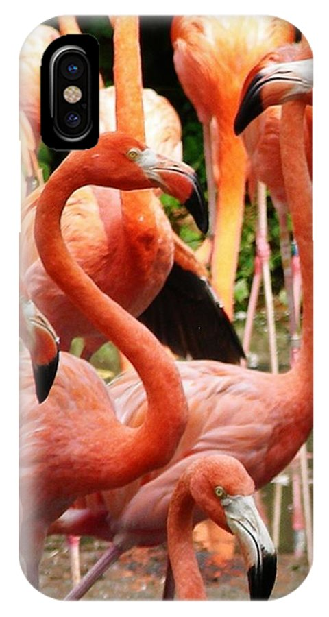 Flamingos IPhone X Case featuring the photograph Flamingo Mob by CL Redding
