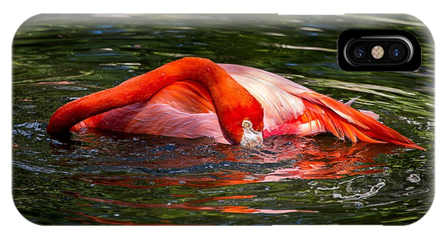 Flamingo IPhone X Case featuring the photograph Flamingo by Scott Mullin