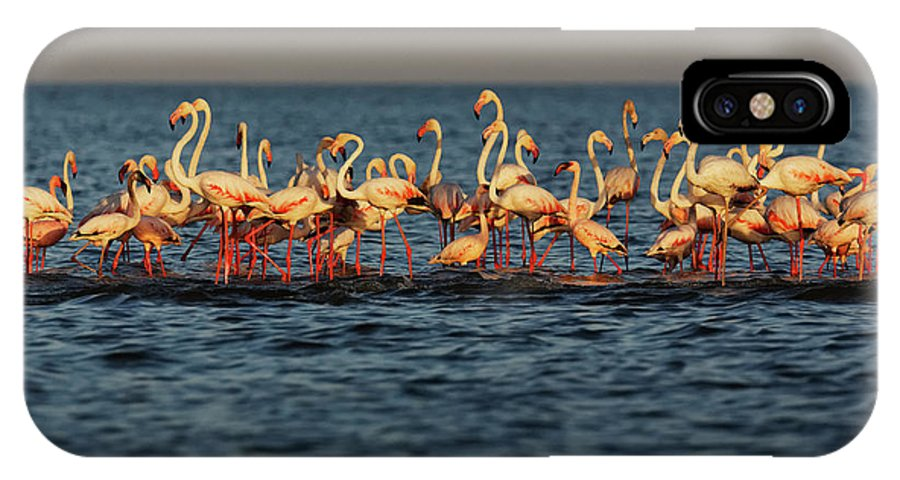 Outdoors IPhone X Case featuring the photograph Flamingos On Lake Turkana Outside Elyse by Randy Olson