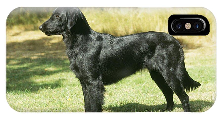 Flat Coated Retriever IPhone X / XS Case featuring the photograph Flat-coated Retriever Dog by John Daniels